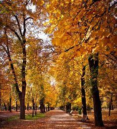 Considerado o pulmão da Nova Iorque, o Central Park é o lugar perfeito para um passeio romântico repleto de natureza e belas paisagens.