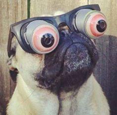 Uh-huh... yeah... I see!  - Pug love