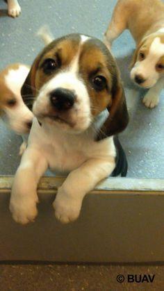 Una investigación muestra cómo perros y gatos bebé son matados en experimentos en Inglaterra | Igualdad Animal