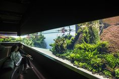 Forests Underwater by Takashi Amano is the Lisbon Oceanarium's temporary exhibition. An exhibition of the famous Japanese aquascaper Takashi Amano.