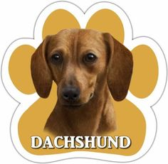 Dachshund Red Car Magnet With Unique Paw Shaped Design Measures 52 by 52 Inches Covered In High Quality UV Gloss For Weather Protection -- For more information, visit image link.(This is an Amazon affiliate link and I receive a commission for the sales)