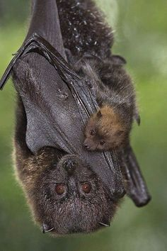 "bat with baby. Guess I'm just in a ""Bat-mood"", but I guess that's okay, being a Kat-woman."