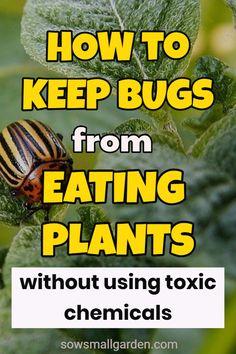 Garden Bugs, Garden Pests, Lawn And Garden, Herbs Garden, Plant Pests, Insect Pest, Backyard Garden Design, Growing Vegetables, Growing Plants