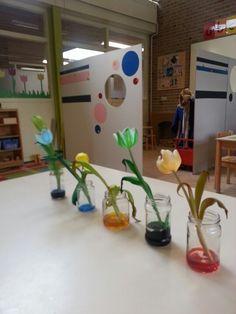 Witte tulpen in de ecoline.... wat leuk! Dan krijg je allerlei waanzinnige kleuren. Iets geleerd op de kleuterschool van dochterlief.