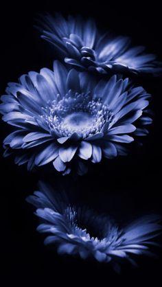All Flowers, Exotic Flowers, Pretty Flowers, Beautiful Flower Quotes, Beautiful Roses, Flower Phone Wallpaper, Purple Wallpaper, Wallpaper Gratis, Lilies Drawing