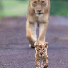 Always has my cub back!