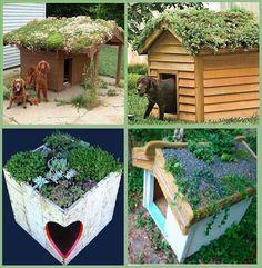 (91) Bilim Proje Üretim Kulübü Pallet dog houses