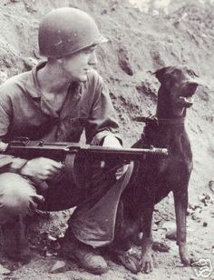 Dogs have served in combat beside man since the Egyptians. Shown here is the doberman pincher, the official dog of the U.S.M.C. during WWII.