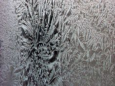 frost lace feathers