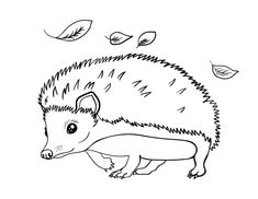 Printable hedgehog coloring page. Free PDF download at http://coloringcafe.com/coloring-pages/hedgehog/