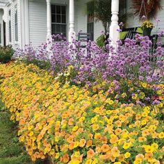 Low-Maintenance Flower Gardens