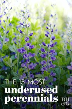 15 of the Most Underused Perennials for Your Garden There's a whole host of lesser-known, underused Cottage Patio, Cottage Garden Design, Cottage Garden Plants, Vegetable Garden Design, Perrinial Garden, Garden Edging, Cottage Gardens, Garden Pests, Easy Garden