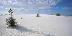 Las White Sands están situadas en la cuenca de Tularosa, al suroeste de Nuevo México, entre las montañas de San Andrés y las de Sacramento al este.De las pocas plantas que se arriesgan lo suficiente para soportar los rigores del clima y las dunas de yeso movedizas, la yuca es la más destacable, de la familia de los lirios.