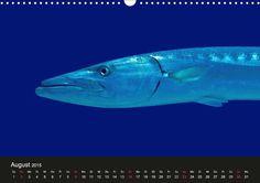Meeres Schönheiten - CALVENDO-Kalender von Tina Melz - Eine Entdeckungsreise durch die Tiefen des Meeres - www.calvendo.de/galerie/meeres-schoenheiten/ -#blau #blue #meer #sea #unterwasser