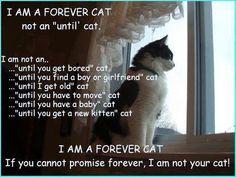 Lovely forever cat …. Amazing World