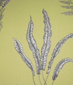 Woodland Ferns Fabric Off white with charcoal outline fern and root design on a lime green printed linen Floral Curtains, Floral Fabric, Feature Wallpaper, Printed Linen, Curtain Fabric, Fabric Paper, Ferns, Pattern Wallpaper, Layout Design