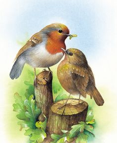 Robin and Chick by David Finney