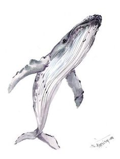 Giclee Print: Humpback Whale by Suren Nersisyan : 24x18in