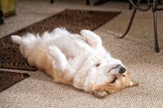 Seeeeeeeepy Puppy. #kkgroupies #pin #corgisofinstagram #corgigram #corgi #pembrokewelshcorgi #corgilove #arthur #arthurofinstagram #corgibooty #myarthur #corgipuppy #corgipassion #corgination #ohio #myoh #ohphotography #1000gifts