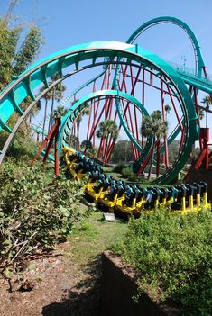 Kumba!!  Looks fun!  Busch Gardens Tampa Bay..the only roller coaster i have ever been on..w my friend debb  on a visit to her parents