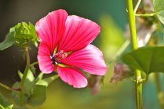 Flowers from my own DIY Secret Garden www.holz-verbunden.de
