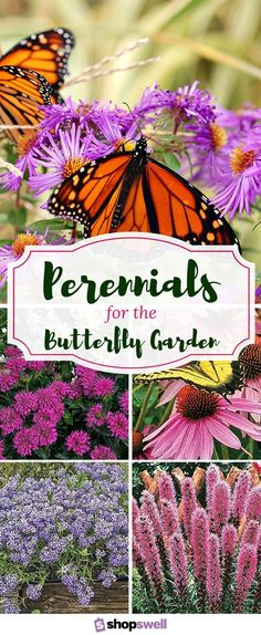 Want more butterflies in your flower garden? Here are twelve easy-to-grow perennials that butterflies can't resist.
