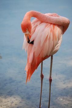 Flamingo | Orlando Photographer| Landscape Photography| Sliwa Studios Photography