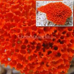 Bee Sponge Coral Reef Aquarium, Saltwater Aquarium, Dramatic Effect, Live Rock, Bubbles, Bee, Coloring, Saltwater Tank