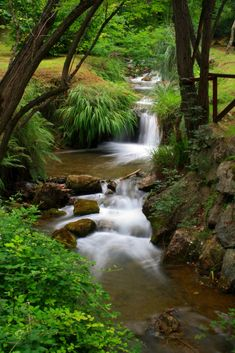 Parque de La Viesca - Torrelavega -  Cantabria - Polanco Photography