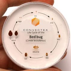 This is a great photo reference for all stages of a bed bug's life. See how small  a bed bug can be in its first stages of life? Make sure to a hire a professional like #JEMPestSolutions, we know what to look for and where! #JEMPestisBest