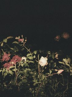 Allison Watkins Photography  #botanical #film #plants REILLUMINATE - allisonwatkins.com