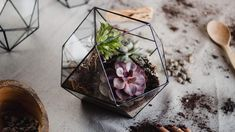 WHAT IS A TERRARIUM? Simply, it is a glass container, chiefly or wholly enclosed, for growing and displaying plants. The main idea behind the terrarium is to create a proper environment for plant g… Large Glass Terrarium, Succulent Terrarium, Terrarium Containers, Glass Containers, Christmas Centerpieces, Table Centerpieces, Gift For Architect, How To Make Terrariums, Garden Gifts