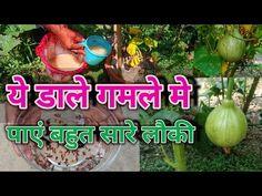 Vegetable Garden Design, Small Garden Design, Ankle Bracelets, Gourds, Gardening, Videos, Youtube, Collection, Pumpkins