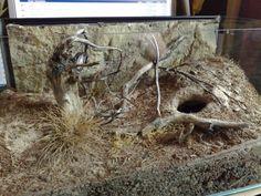 Tarantula naturalistic set up | Inspired By The Natural Habbitat Thread..