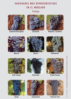Variedades Tintas Más Representativas    #VinoPremier