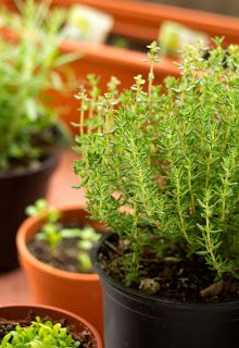 Gardening Tips For Growing Herbs