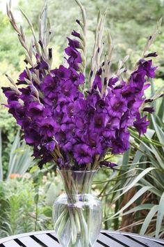 Purple Prince Hardy Glad for sale buy Gladiolus 'Purple Prince' Full Sun Perennial Flowers, Full Sun Perennials, Best Perennials, Flowers Perennials, Planting Flowers, Dark Purple Flowers, Purple Peonies, Colorful Flowers, Gladiolus Bulbs