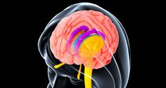 By linking genes to brain shapes, scientists have a new way to study how the brain works.