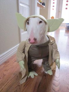 Can't decide on yoda or frankenweenie for Zeus's Halloween costume...