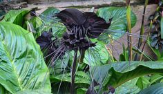 Imágenes e información de las flores Exóticas más impresionantes