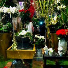 Flower shop in Paris Paris Shopping, Flower Shops, Table Decorations, Flowers, Plants, Furniture, Home Decor, Decoration Home, Flower Stores