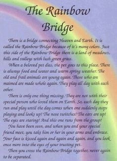 The Rainbow Bridge - I will be surrounded when I get there, and I miss them all....