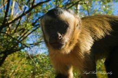 Primates: The Fearless Science of Jane Goodall, Dian Fossey, and Biruté Galdikas Dian Fossey, Jane Goodall, Orangutan, Primates, A Funny, South Africa, Novels, Wildlife, Science
