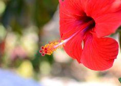 Cretan Red Wildflowers of Crete  Greece Crete by CestLaVieArt