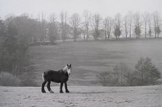 Sussex, England, 1953 by Henri Cartier Bresson