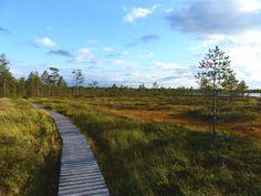 Kyrönkankaantie - Kauhaneva Finland, Country Roads, Mountains, Nature, Travel, Viajes, Naturaleza, Destinations, Traveling