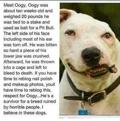 When has this ever been ok!?! This breed of dog has been deemed a red flag... When in reality it is only the people that the dog is loyal to! The dog only wants to please its master, a dog will do anything just to be loved. EVEN FIGHT AND DIE. All they want is to be loved... Think about that!