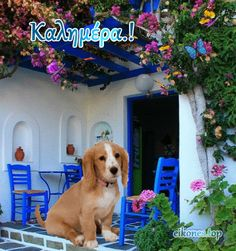 Greek Language, Wall Colors, Color Walls, Good Morning, Labrador Retriever, Dogs, Animals, Spring, Buen Dia