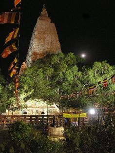 "Bodhi Tree - Bodhgaya, India  The Bodhi Tree in Bodhgaya is a descendant of the tree under which Siddharta Gautama attained enlightenment after 49 days of meditation and became the ""Enlightened One."""