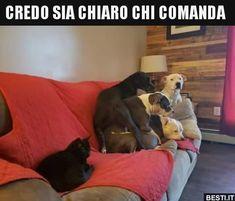 Que medinho bobo Happy Animals, Funny Animals, Cute Animals, Funny Dogs, Cute Dogs, Beagle, Cats Are Assholes, Funny Scenes, Bad Cats